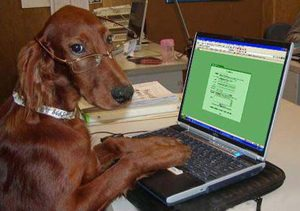 Dog typing at laptop